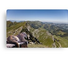 971-Cougar Heights Canvas Print