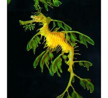 Dragon Seahorse by Christine Richardson
