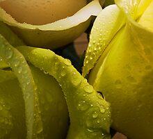 Nature's Genius Through Imperfection by oastudios