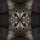 Double Vision by jodi payne