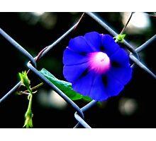 blu Photographic Print