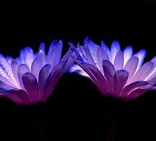 glowing by jerry  alcantara