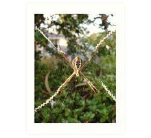 St Andrews Cross Spider on Web Art Print
