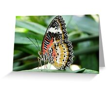 Colorful - Lacewing Greeting Card