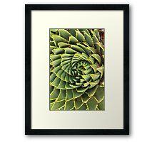 Spiral succulent Framed Print
