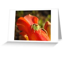 Spider on Red Bell Greeting Card
