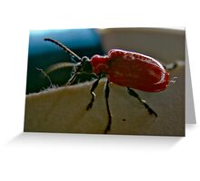 Lily Beatle Greeting Card