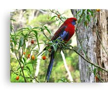 Crimson Rosella - Wilsons Promontory National Park Canvas Print