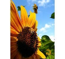 A Nice Day for Honey Photographic Print