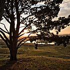 Sunrise at the National Arboretum in Canberra/ACT/Australia (2) by Wolf Sverak