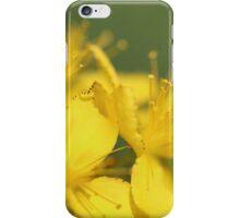 St John's Wort, (Hypericum perforatum) iPhone Case/Skin