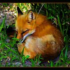 Shady Place Nap by BBatten