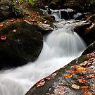 Rushing River by Terri~Lynn Bealle