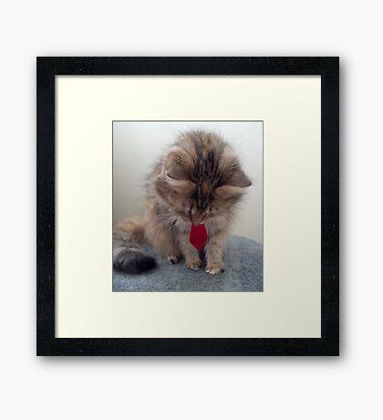 Lulu & bowtie Framed Print