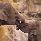 Elephantine Kiss by kajo
