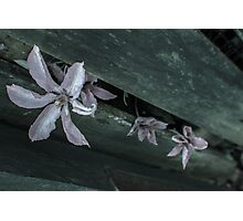 Flowers through a Fence 1 Photographic Print