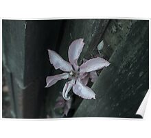 Flowers through a Fence 2 Poster