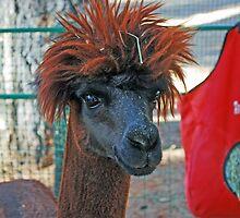 alpaca punk rocker 2 (NCF) by Lenny La Rue, IPA
