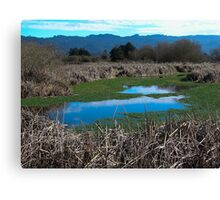 Arcata Marsh, Arcata, CA Canvas Print