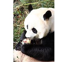 Ice Cool Panda Photographic Print