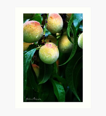 Millions Of Peaches. Peaches For Me Art Print