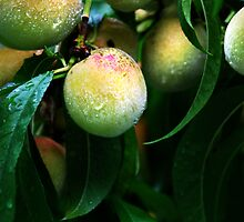 Millions Of Peaches. Peaches For Me by lisabella