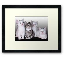 Three Of A Kind, Plus One Framed Print