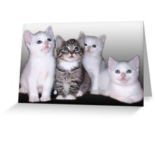 Three Of A Kind, Plus One Greeting Card