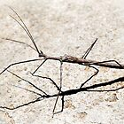 Sticks and stones may break my bones … by Rina Greeff