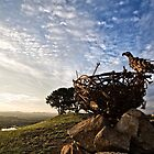 Welcoming the Rising Sun at the National Arboretum in Canberra/ACT/Australia (2) by Wolf Sverak