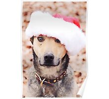 Holiday Hound Poster