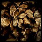 death of a hydrangea III by leecemee