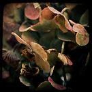 death of a hydrangea II by leecemee