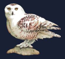 Snow Owl by Walter Colvin