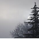Winters morning by Karen  Betts