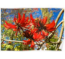Flame tree flower Poster