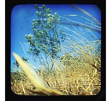 When the Wind Blows-Version ii Photographic Print
