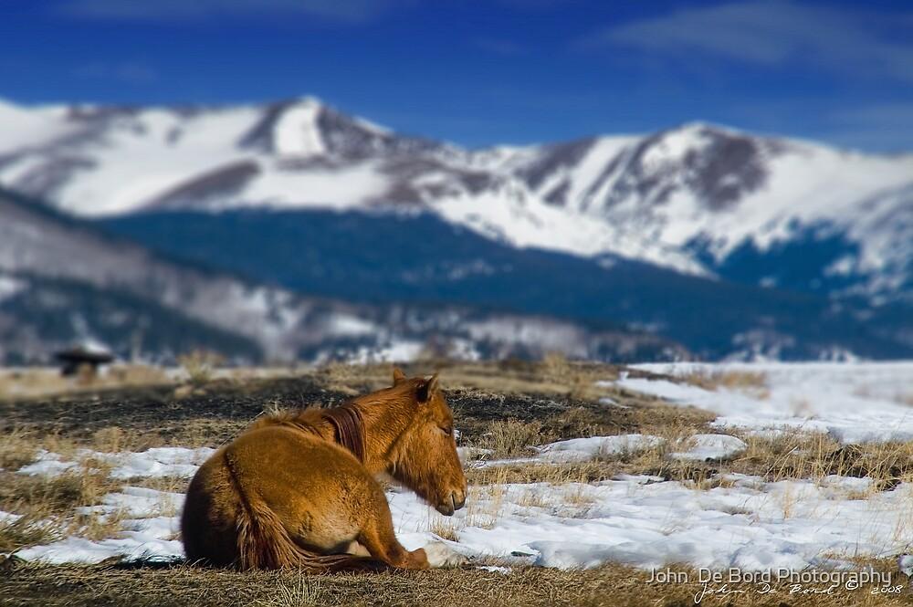 Country Relaxin' by John  De Bord Photography