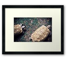 Race for the prize Framed Print