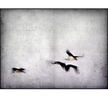 Flight of the Ibis Photographic Print
