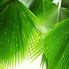 Palm Leaves, Fiji (taken lying underneath the tree looking directly upwards). by Samantha  Goode