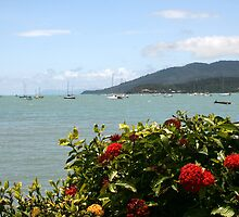 Airlie Beach Flowers by Dave Law