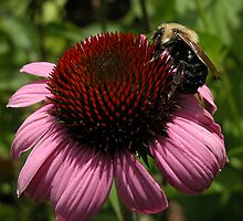Cone N Bumble by Corinne Noon
