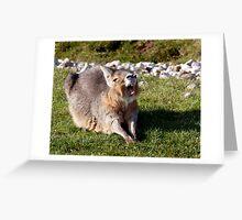 Oh Yawnnnnnnnnnn.... I'm getting Bored of Posing! Greeting Card
