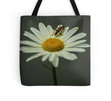 Lightning Bug on a Wet Daisy (1) Tote Bag