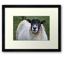 Yorkshire Sheep Framed Print