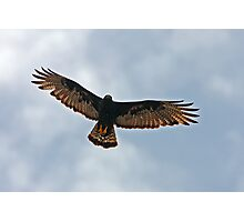 Zone-tailed Hawk Photographic Print