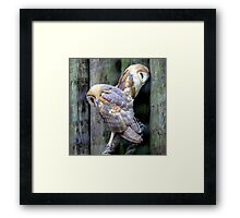 Two Of a Kind - Barn Owls Framed Print