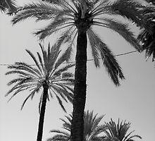 Palms by Jo Byrne