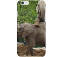 Elephants at Pittsburgh Zoo iPhone Case/Skin